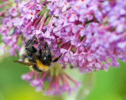 Bee Upside Down