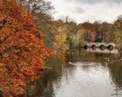 Autumn in Blandford