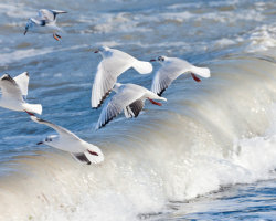 Gulls and Waves 2