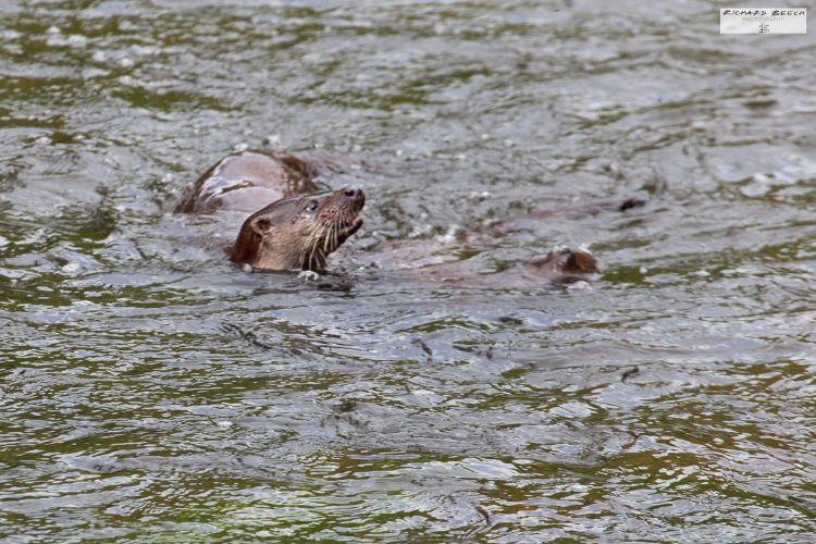 ottersblandfordjun1691200
