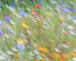 Summer Wildflowers Impressionism