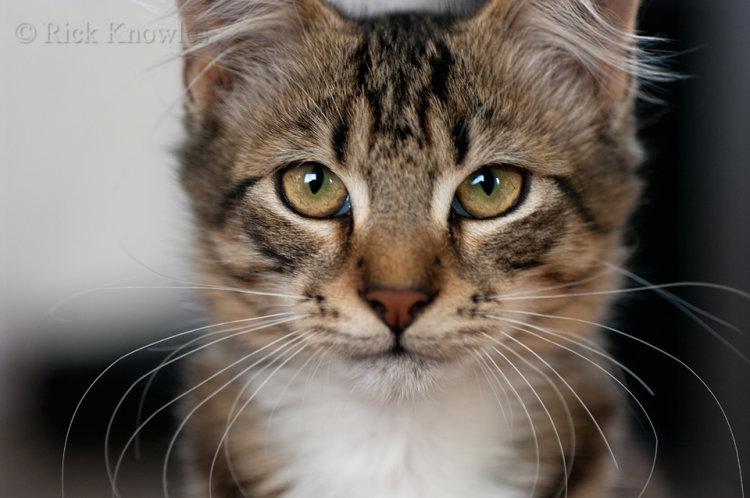 Tabby Cat Up Close