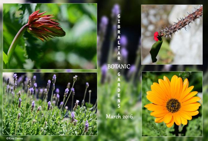Alameda Botanic Gardens, Gibraltar
