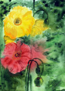 Poppies (Watercolour) by Majorie Robinson
