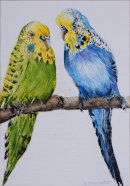 Budgerigars (watercolour) by Rosie Muncaster