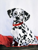 Dalmation Puppy (watercolour) by Rosie Muncaster