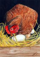 Sitting Hen (watercolour) by Majorie Robinson