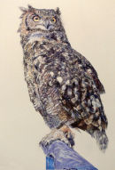 Eagle Owl (watercolour) by Mike Ibbetson
