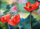 Poppies (watercolour) by Sheila Linkleter