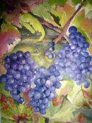 Grapes on the Vine (watercolour) by Rosie Muncaster