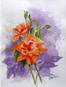 Roses (watercolour) by Joyce Miller