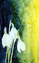 Snowdrops (watercolour) by Alison Montgomery