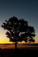 Three Elements Tree