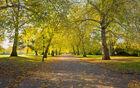 Battersea Autumn