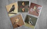 5 British garden bird greeting cards