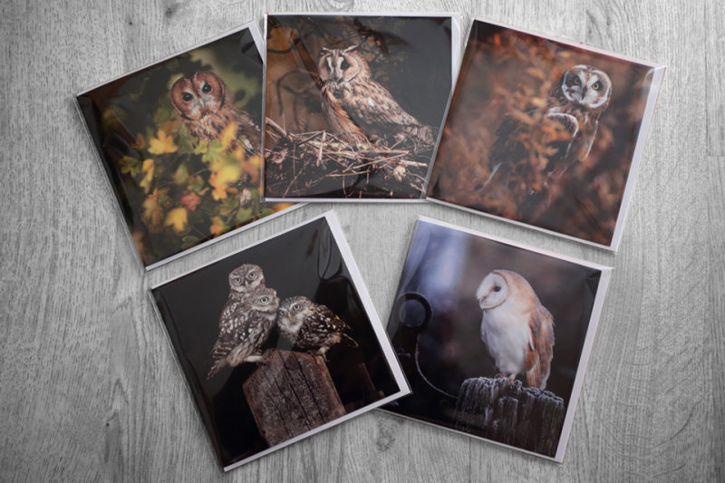 Robinlowry 5 british owl greeting cards 5 british owl greeting cards m4hsunfo
