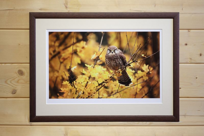 Each print can be carefully matched to a mount colour and frame style. Availability and price upon request