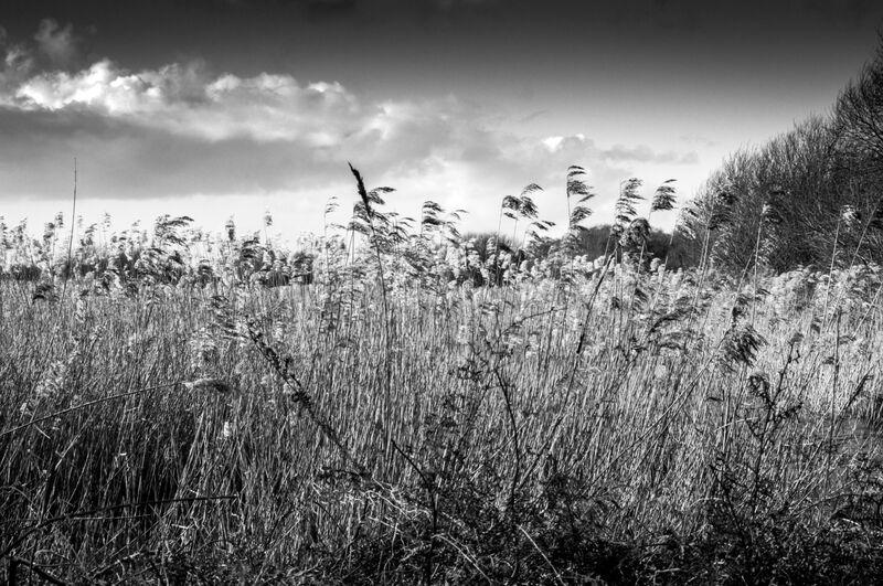 Field by the moor