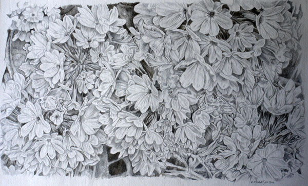 Floral Metalpoint drawing