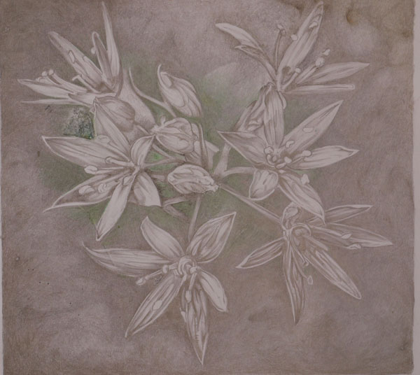 Damaged Gold and silverpoint drawing
