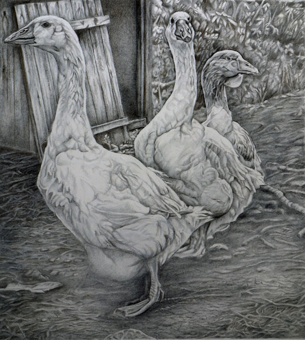 Geese in Allendale. Gold and silverpoint drawing