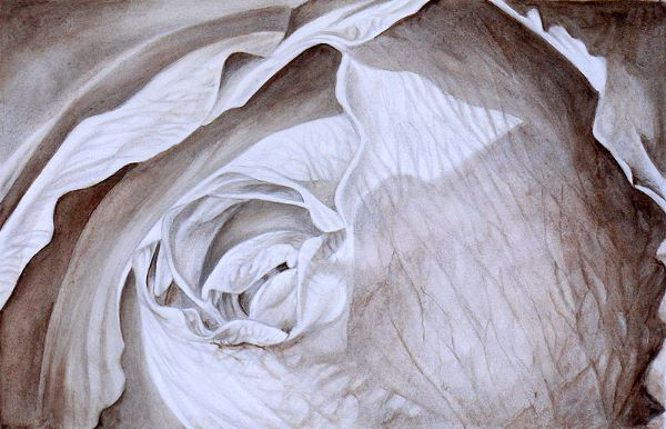 Rose drawing using metalpoint and watercolour wash