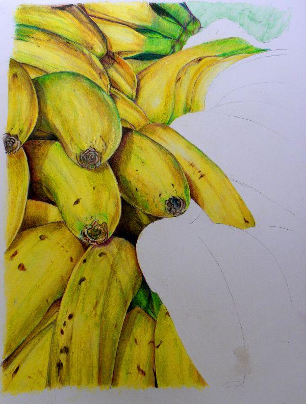 Pencil work in progress, bananas