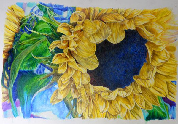 Sunflower, pencil