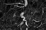 Roots, El Desierto