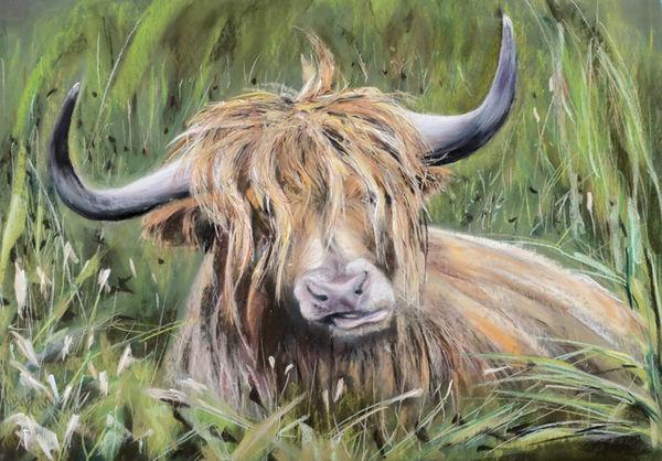 Highland Cow - Pastel