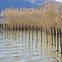 Reeds and posts, lakeside, Aix-le-Bains