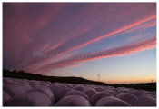 112 Silage Bales at sunset, Sherkin Island