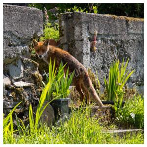 147 Fox – a backward glance