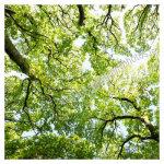 106 Treetops at the lane, Sherkin Island