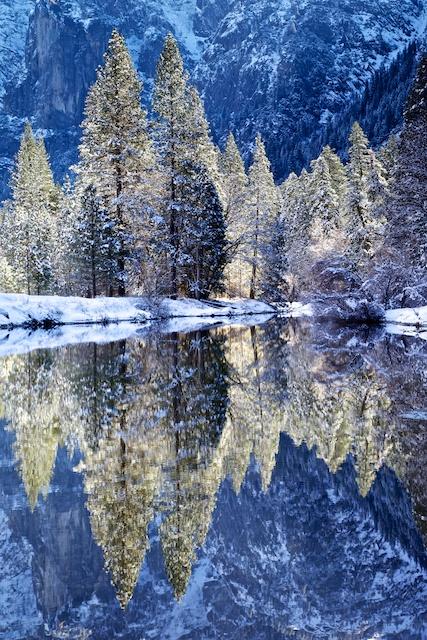 Merced River Backlit Trees