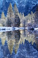 Merced River Backlit Trees