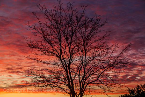 Glen Iris Sunrise
