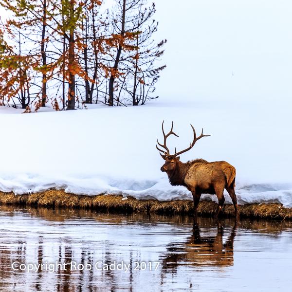 A Winter Wade