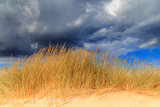Dune Grass And Storm Clouds