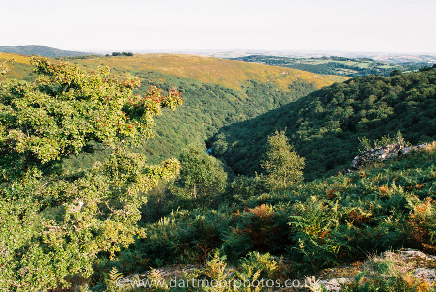 Bench Tor to The Dart Gorge