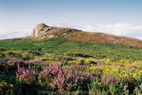 Haytor Low Man Heather and Gorse