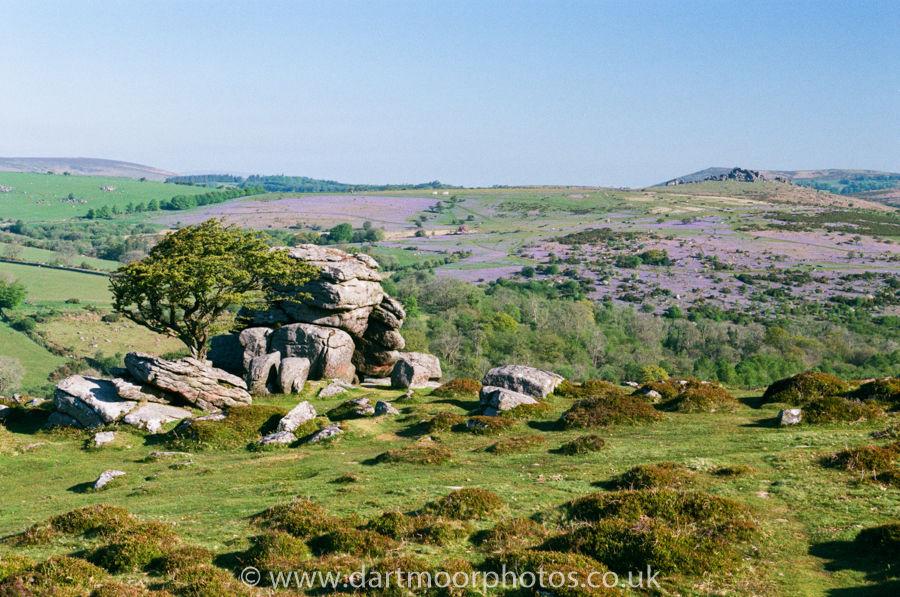 Emsworthy Rocks with bluebells