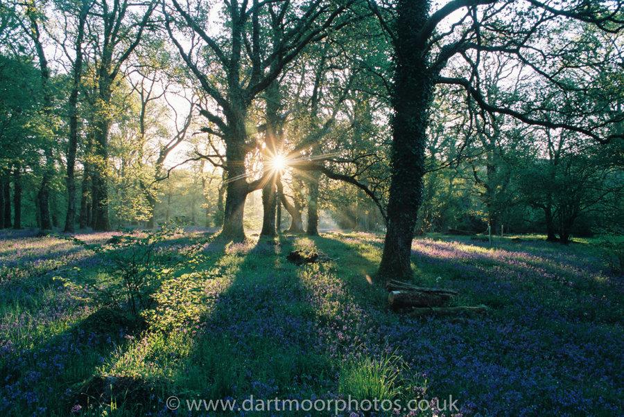 Bluebell Sunrise Gidleigh Park