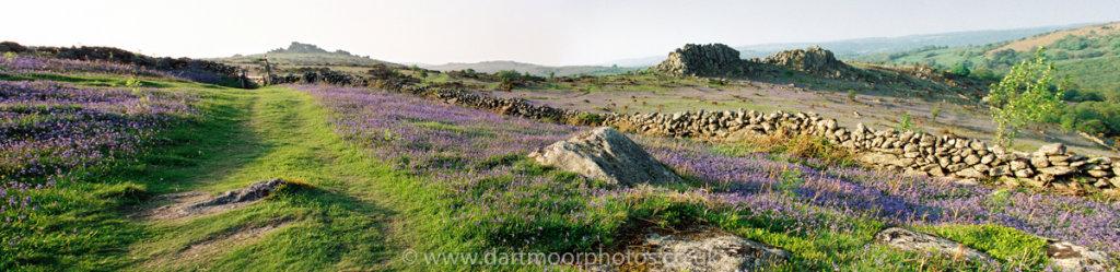 Houndtor & Greator bluebells panorama