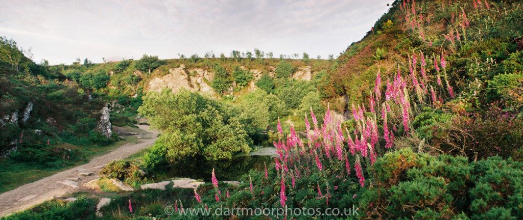 Haytor Quarry with foxgloves