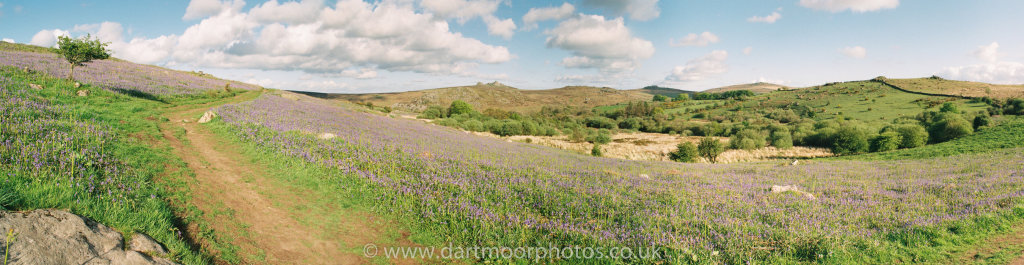 Holwell lawn to Haytor Bluebell panorama
