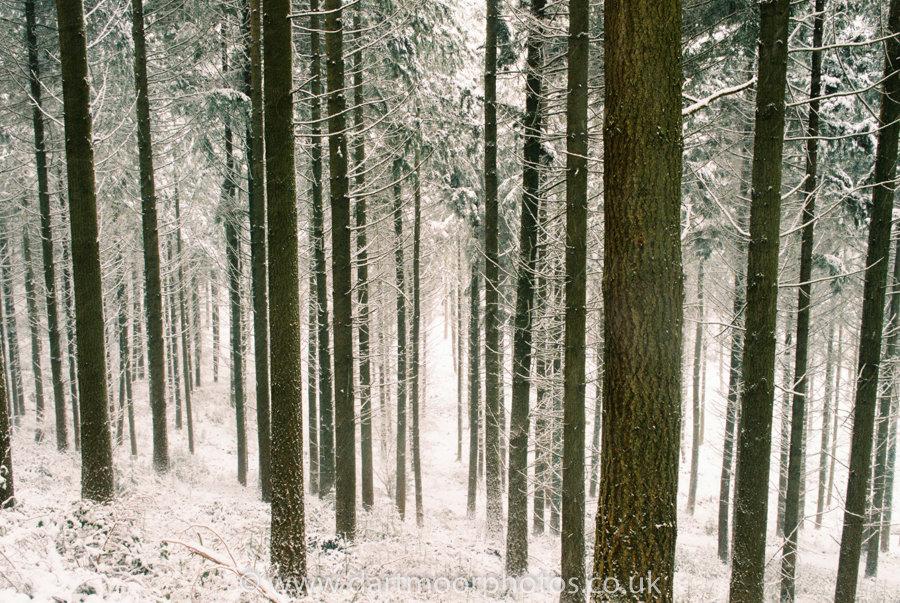 Houndtor Wood