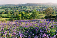 Bluebells with Moretonhampstead