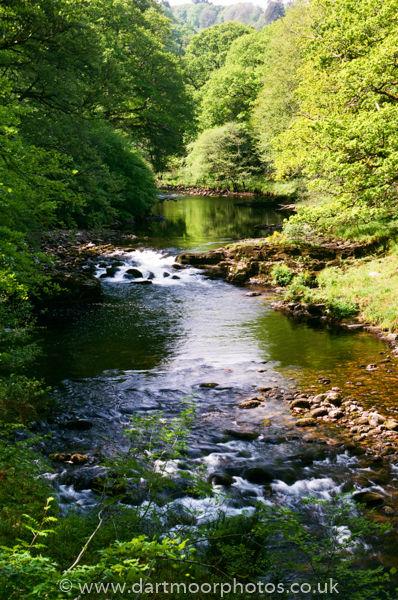 River Dart, Spring leaves