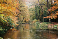 River Teign near Fingle Bridge